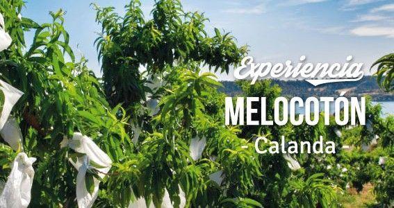 Descubre la Experiencia Melocotón.